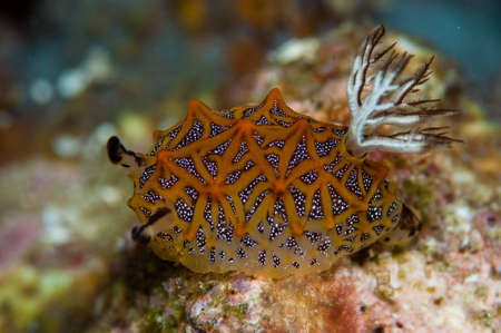 nudibranch photo