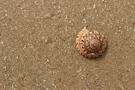 Sea shell color beautiful. Looks rounded. Put on sand.