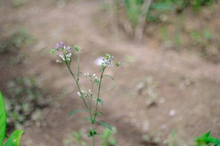 beautiful cosmos flower blooming Stok Fotoğraf