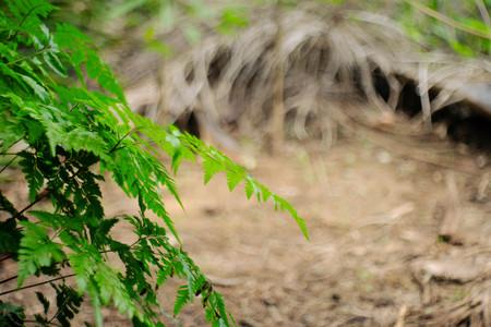 Beautyful ferns leaves green foliage natural floral fern background in sunlight. Stok Fotoğraf