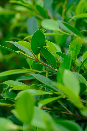Closeup nature view of green leaf on blurred greenery background in garden with copy space using as background natural green plants landscape, ecology, fresh wallpaper concept. Stok Fotoğraf