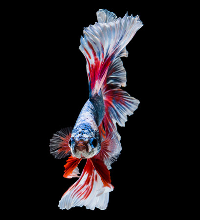 animals and pets: abstract beautiful tail of fish on black back ground