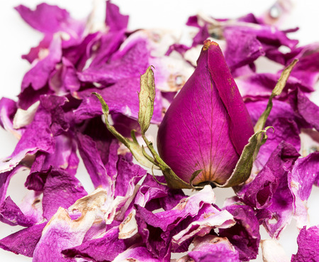 muerte: flor rosa seca