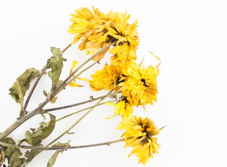 dode bladeren: bloem dood Stockfoto