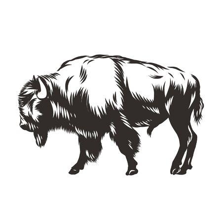 Buffalo - Bison nord-américain Banque d'images - 70985690