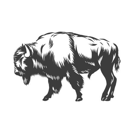Ilustracja wektorowa tuszem amerykański bawół na białym tle