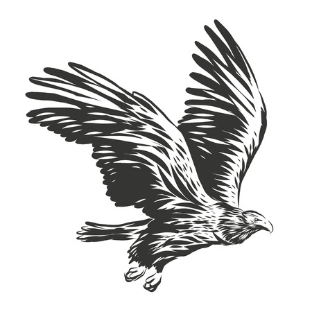 American eagle illustration Banque d'images - 82655013