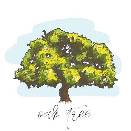 Oak tree hand drawn vector illustration