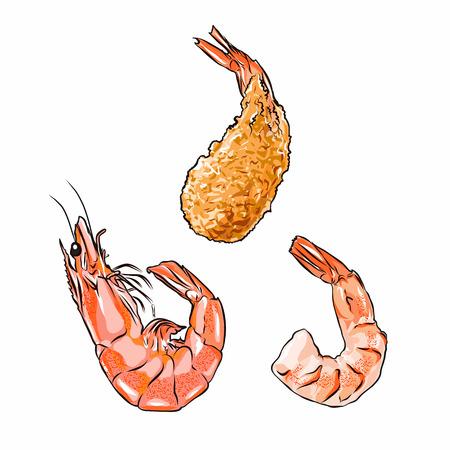 Illustrator van garnalen in shell, zonder shell en gebraden vector geïsoleerde EPS 10 Stockfoto - 94218226