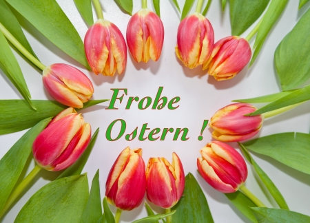 frohe:  Frohe Ostern  with pink tulips
