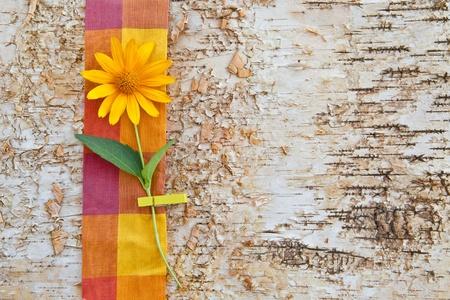 birchbark: Wooden background made from birchbark with a yellow flower Stock Photo