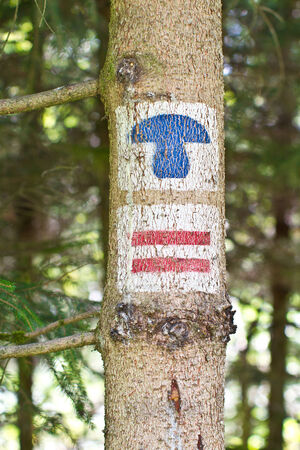 Tree trunk with hiking signs, markings for mushrooms photo