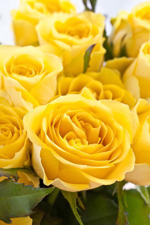 rosas amarillas: Ramo de rosas amarillas frescas, totalmente florecidos Foto de archivo