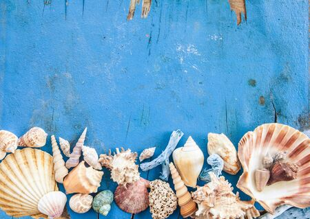 beachcombing: Weathered wooden background with various sea shells Stock Photo