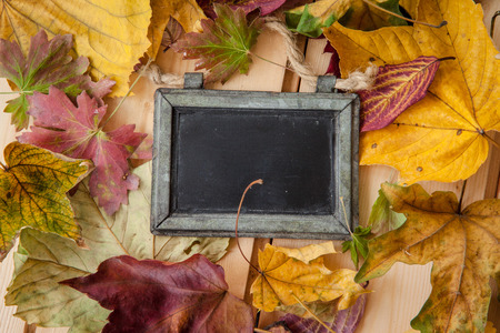 fallen leaves: Vintage chalkboard with colorful fallen autumn leaves Stock Photo