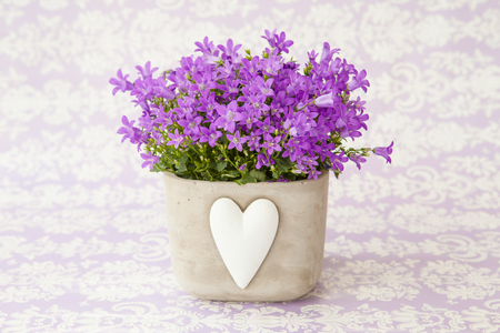 mothersday: Purple bellflowers in a pot with heart