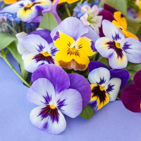 Little bouquet of spring flowers on purple paper stock photo little bouquet of spring flowers on purple paper stock photo 56191243 mightylinksfo