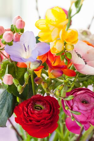 Variety of colorful blooming spring flowers Stock Photo