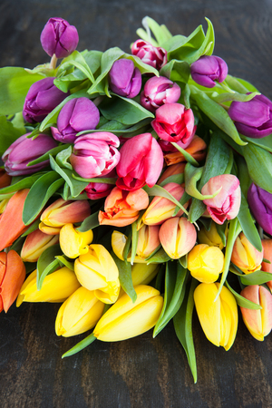 Fresh tulips in bright colors on dark wooden background Stock Photo