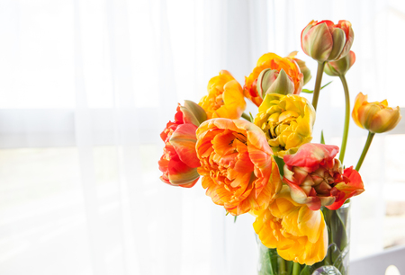 Fresh red and yellow tulips in a vase Stock Photo