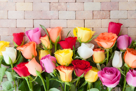 Colorful fresh roses on a rustic stone background Stock Photo