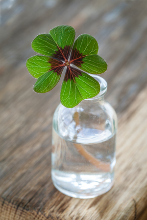 Single four leaved clover in a little bottle Stock Photo
