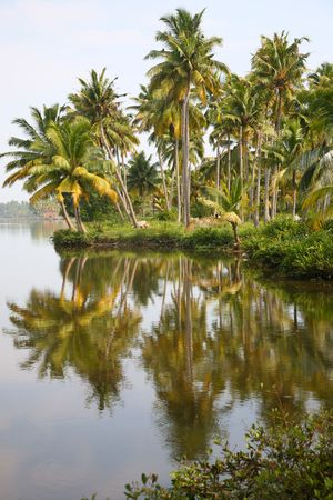 Canals in the  Back Waters in Kerala photo