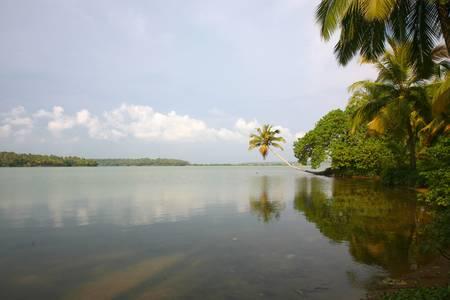 Back Waters in Kerala photo