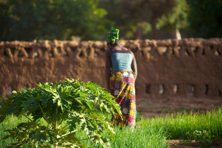 Mali: Woman working in the Land of the Dogons in Mali late afternoon Editorial
