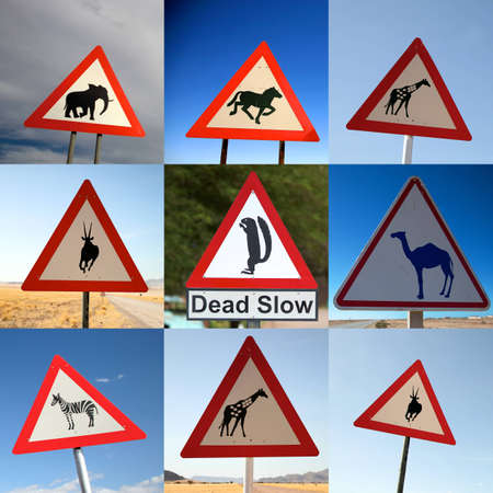Animal Crossing Signs photo