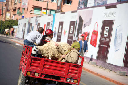 Red motorbike and a goat in the street of Marrakesh, Morocco. Stock Photo - 12572204
