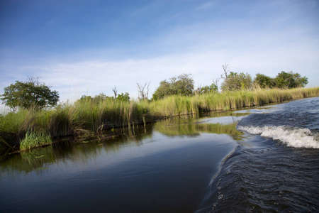 Landscape of water and grass in the Okavango Delta in North of Botswana. The Delta is the biggest sweatwater reservoir in this area and the water is absolutely clean Stock Photo - 12660107