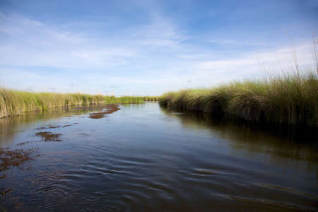 Okavango Delta: Landscape of water and grass in the Okavango Delta in North of Botswana. The Delta is the biggest sweatwater reservoir in this area and the water is absolutely clean Stock Photo