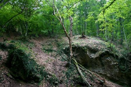 Cascades in spring forest in Crimea in Ukraine photo