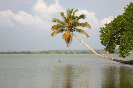 Back Waters in Kerala, India. photo