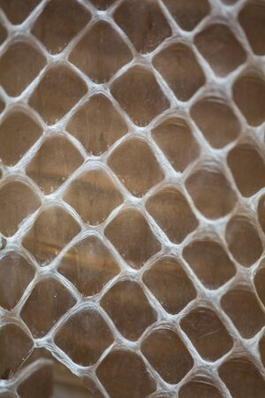 Snakeskin background, closeup in Costa Rica photo