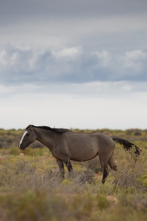 Wild Horse In Utah close by the Monument Valley, within the Navajo Indians Reserve Stock Photo - 17519925