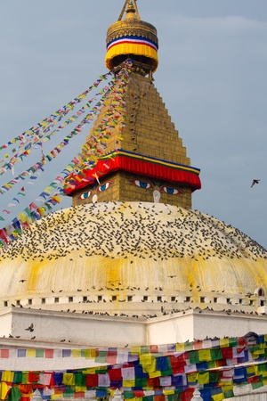 stupa one: Boudhanath Stupa, one of the main landmark in Kathmandu surrounded by birds early in the morning, Nepal