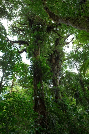 Santa Elena Cloud Forest in Costa Rica photo