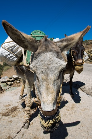Close up from two working mules and there handmade and nicely decorated  eating bags. Mules are still working a lot and popular in Folegandros, Greece , 2013. Stock Photo - 21470688