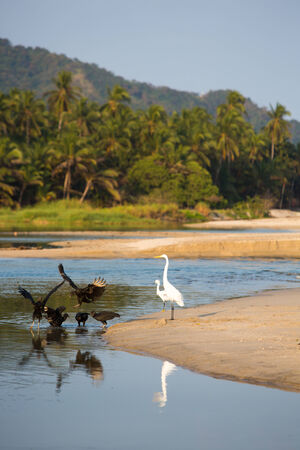 Group of birds early in the morning on the coastline near Palomino, La Guajira, Colombia 2014. photo