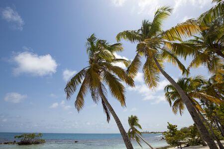 playas tropicales: Parque Nacional Morrocoy, islas paradis�acas con cocoteros, playas de arena blanca, mar turquesa y el cielo azul profundo en Venezuela Foto de archivo