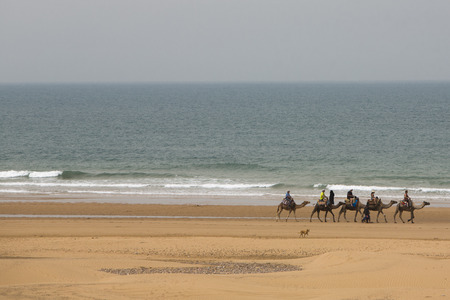Caravan of five camels moving towards the sea on the beach of Sidi Kaouki with unrecognisable tourists, near Essaouira. Morocco Standard-Bild