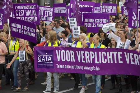 exclaim: BRUSSELS, BELGIUM, SEPTEMBER 28: Belgian Gaia activists protest on the streets of Brussels on September 28, 2014 against slaughter without stunning. Support of people to petition for stunning animals before slaughter so they are unconscious before being k Editorial