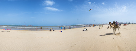saddle camel: Essaouira, Morocco - August 21, 2014: Panorama of Camels on the beach in Essaouira, with people and kite surfers pictured in the background. Morocco 2014.