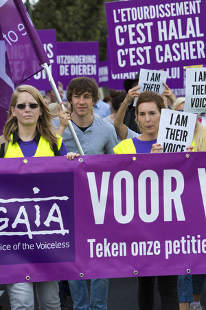 BRUSSELS, BELGIUM, SEPTEMBER 28: Belgian Gaia activists protest on the streets of Brussels on September 28, 2014 against slaughter without stunning. Support of people to petition for stunning animals before slaughter so they are unconscious before being k Editorial
