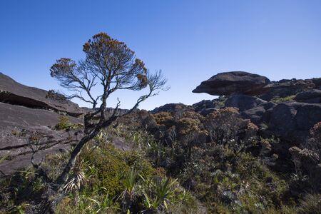 steine im wasser: Landschaft an der Spitze des Mount Roraima am Morgen mit blauem Himmel. Seltsam geformte schwarzen vulkanischen Steinen, Wasser und endemische Pflanzen. Gran Sabana. Venezuela 2015. Lizenzfreie Bilder