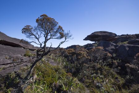 volcanic stones: Landscape at the top of Mount Roraima in the morning with blue sky. Strange shaped black volcanic stones, water and endemic plants. Gran Sabana. Venezuela 2015.