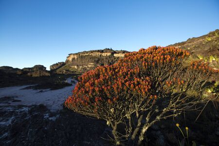 volcanic stones: Landscape at the top of Mount Roraima in the morning with blue sky. Black volcanic stones, water and red endemic plants. Gran Sabana. Venezuela 2015. Stock Photo