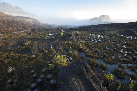 strange mountain: Landscape at the top of Mount Roraima in the morning with blue sky.  Stock Photo